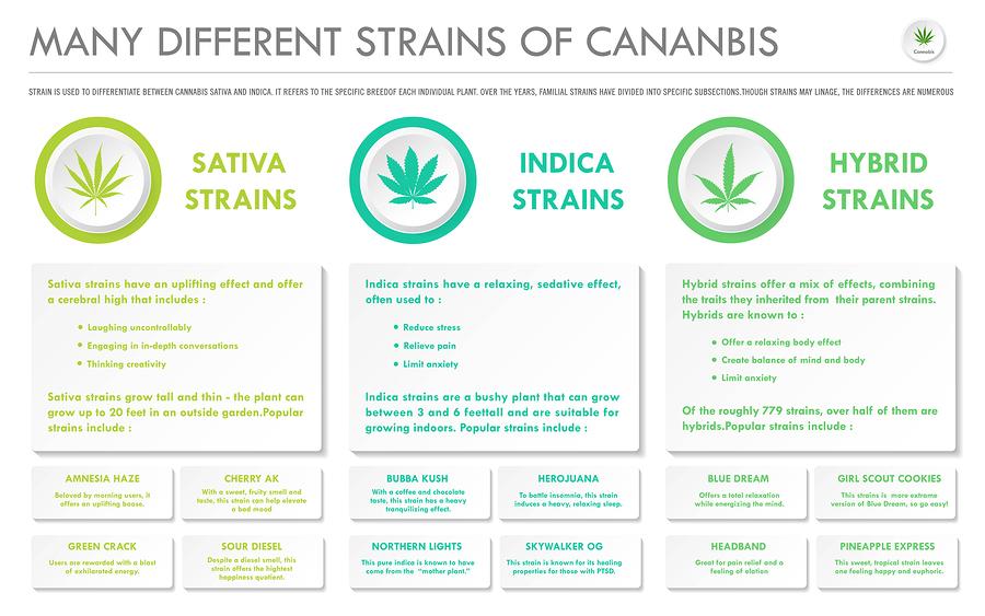 Best Beginner Cannabis Strains to Grow