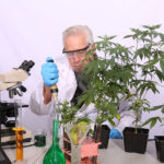 the best cannabis strains to grow and why