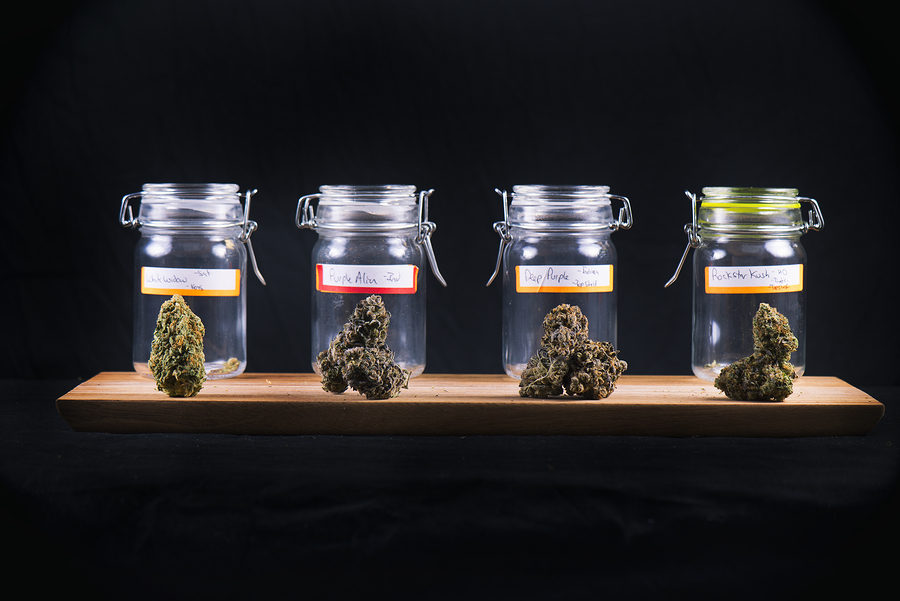 cannabis seeds and strains