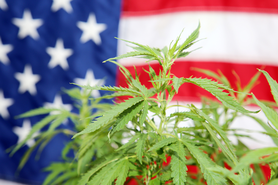 Buy Weed legally in your state