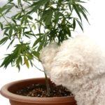 Weed Aroma Tips: How to Eliminate Marijuana Odor