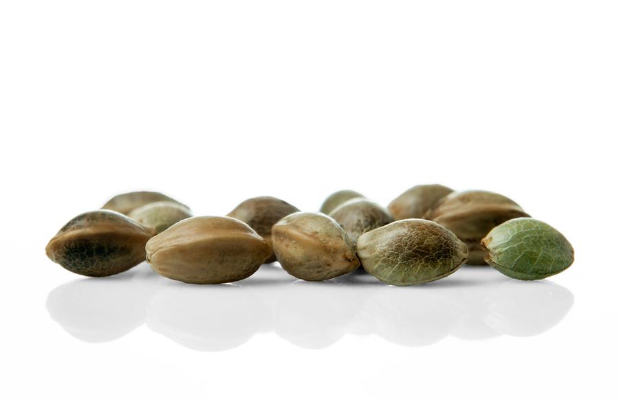 make your own feminized cannabis seeds