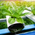 guide hydroponics