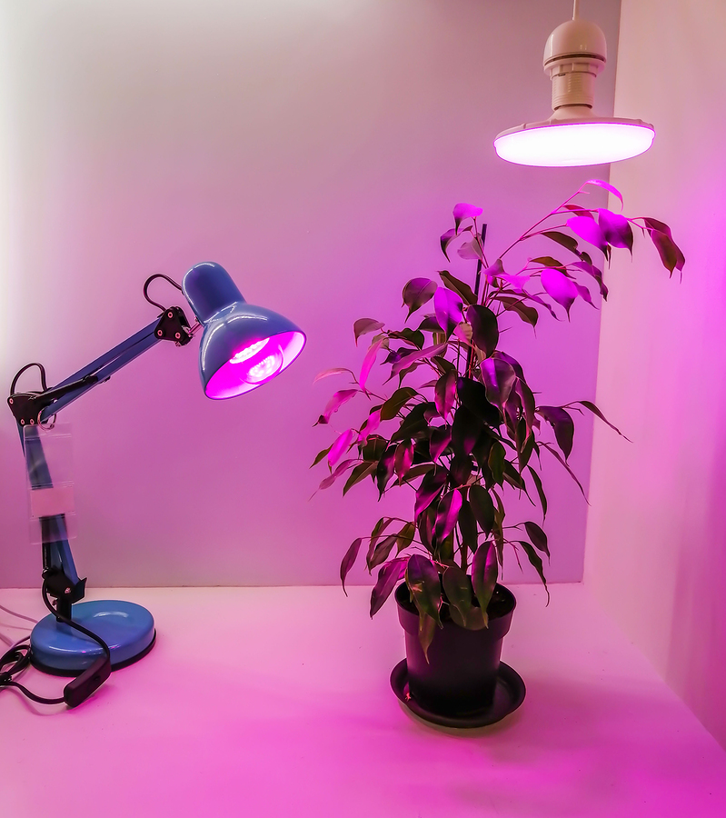 how to grow weed privately
