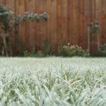 grow cannabis in winter