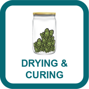 cannabis drying & curing guide