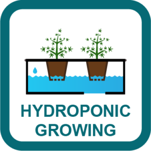cannabis hydroponic growing guide