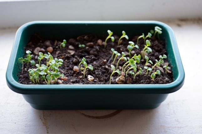 best seedling propagation kits
