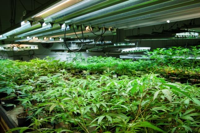 setup grow room lights