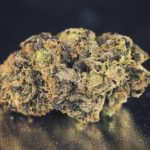 best mold-resistant-cannabis strains