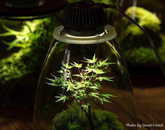 Best indoor lights for cannabis