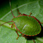 Best Pest Control Products for Cannabis